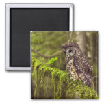 Northern Spotted Owl (Strix occidentals caurina) Refrigerator Magnet