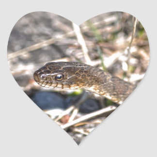 Northern Water Snake Reptile Wildlife Photo Stickers