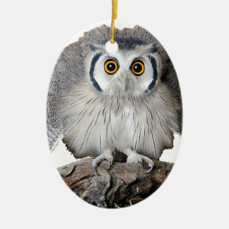 """""""Northern White-faced Owl"""""""
