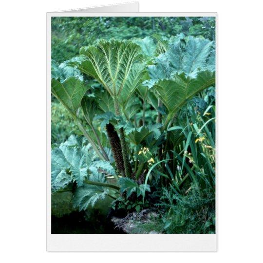Northwest Island Garden Card