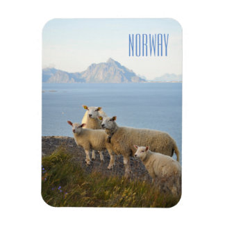 Norway sheep on mountain top landscape photo magne rectangular photo magnet