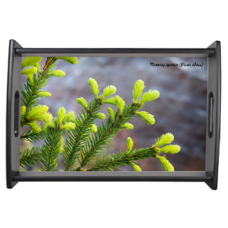 Norway spruce food tray