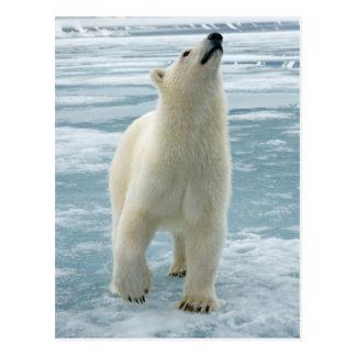 Norway, Svalbard Archipelago, Spitsbergen 8 Postcard