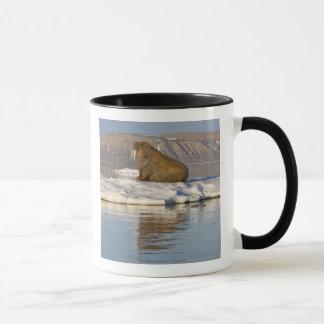 Norway, Svalbard, Edgeoya Island, Walrus Mug
