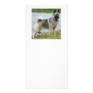 Norwegian_Elkhound full Personalised Photo Card