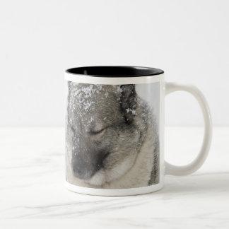 Norwegian Elkhound Two-Tone Coffee Mug