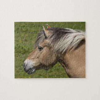 Norwegian Fjord Horse Puzzles