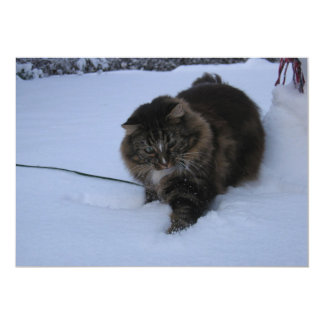 norwegian forest cat brown tabby in snow card
