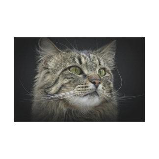 Norwegian Forest cat portrait Stretched Canvas Prints