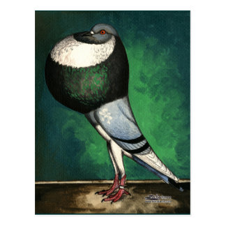 Norwich Cropper Blue Pied Postcard