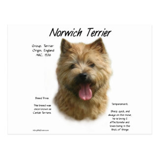 Norwich Terrier History Design Postcard