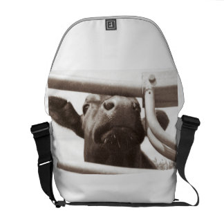 Nosey Cow Commuter Bag