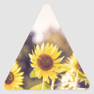 Nostalgic sunflower field triangle sticker