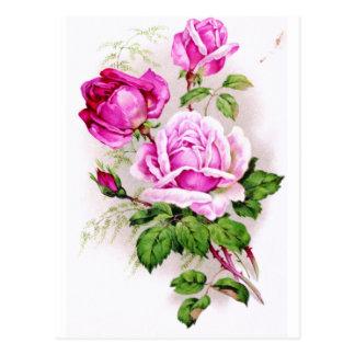Nostalgic Victorian roses Postcard