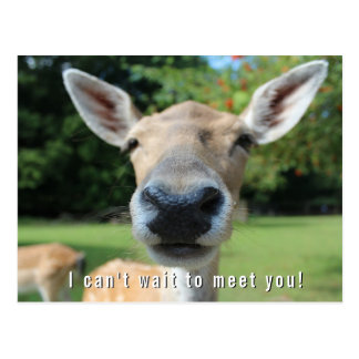 Nosy Deer Can't Wait to Meet You Teacher Note Postcard