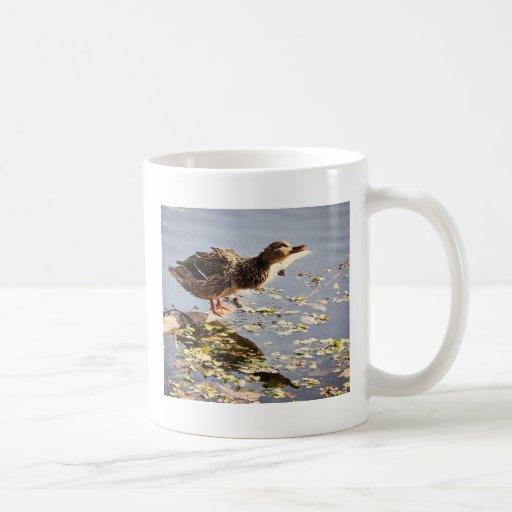 Not Duck Dynasty Coffee Mug