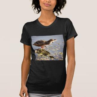 Not Duck Tee Shirts