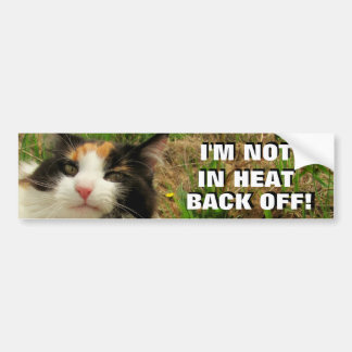 Not In Heat, Back Off Calico Cat Meme Bumper Sticker
