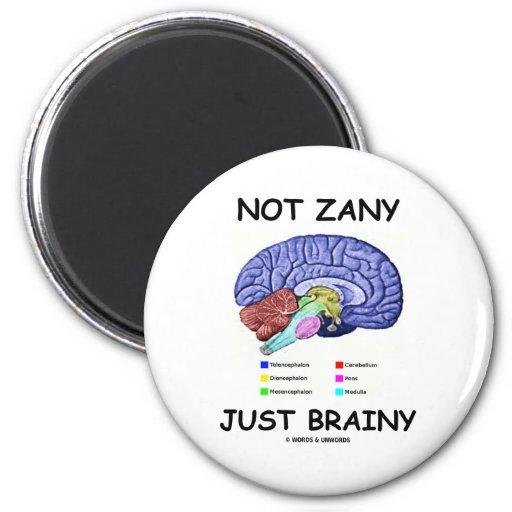 Not Zany Just Brainy (Brain Anatomy Humor) Refrigerator Magnet