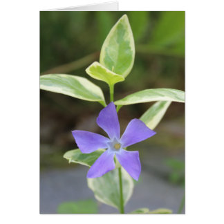Note Card, Blank card of a small purple flower