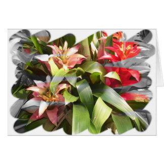 Note Card - Bromeliads Twist