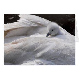 Note Card: Cute Cygnet on Swan's Back Card