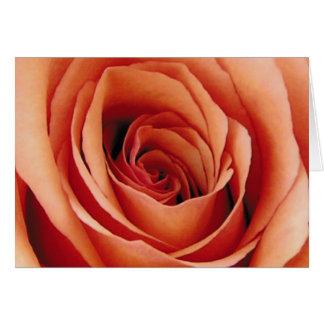 Note Card, Orange Rose petals up close Card