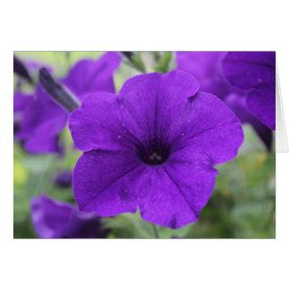 Note Card, purple petunia flower, blank Card