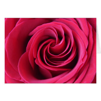 Note Card, Red Rose close up of petals Card