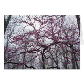 Note Card - Redbud Blossoms