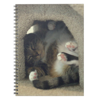 Notebook - Nap Like You're a Cat!