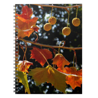 Notebook / Personal Journal - Sycamore and fall