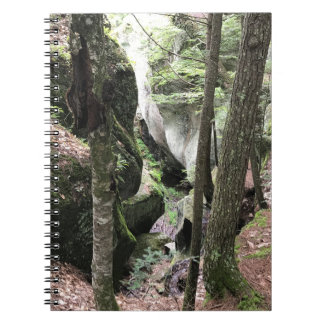 Notebook with beautiful picture of the woods