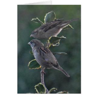 Notecard: Betty & Ian's House Sparrows Card