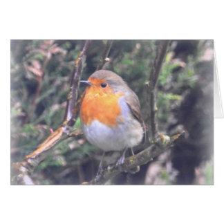 Notecard: British Robin Card