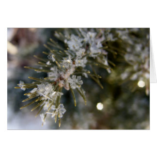 NOTECARD, Crystal flakes on Spruce Needles Card