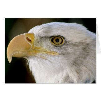 Notecard Eagle