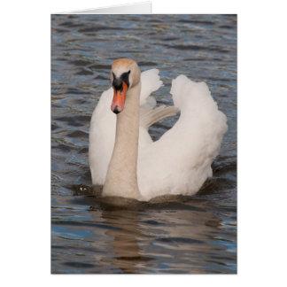 Notecard: 'Grace' Male Mute Swan Card