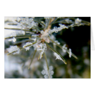 NOTECARD, Ice Crystals on Spruce Needles 1 Card