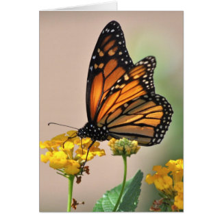 notecard - Monarch Butterfly Note Card