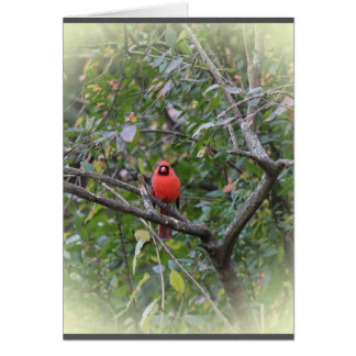 Notecard with Northern Cardinal