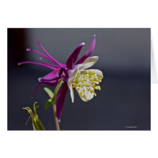 Notecard with Remembrence Columbine Flower