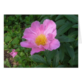 Notecard with Single Pink Peony