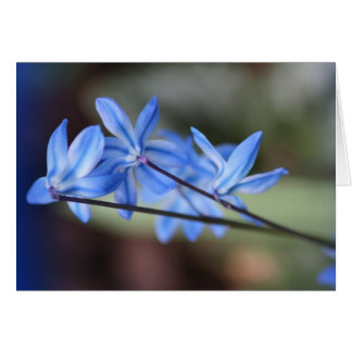 Notecard with Variegated Scilla