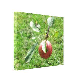 """""""Nova Scotia  🍎 Apples"""" Canvas Print"""