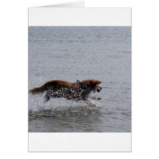 Nova_Scotia_Duck_Tolling_Retriever_in water Card