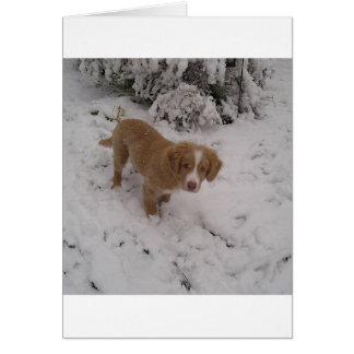 Nova_Scotia_Duck-Tolling_Retriever pup in snow Card