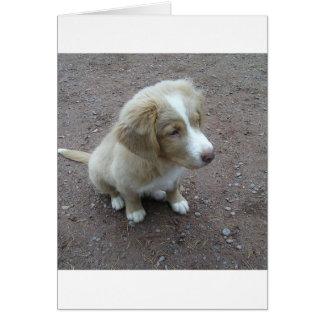 NovaScotiaDuckTollingRetriever pup sitting Card