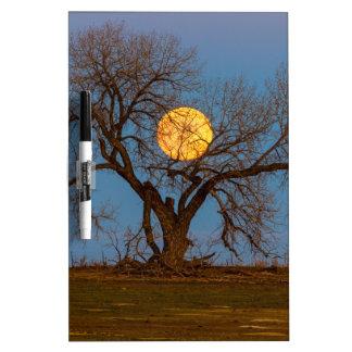November Supermoon Tree Dry Erase Board
