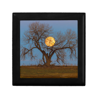 November Supermoon Tree Gift Box